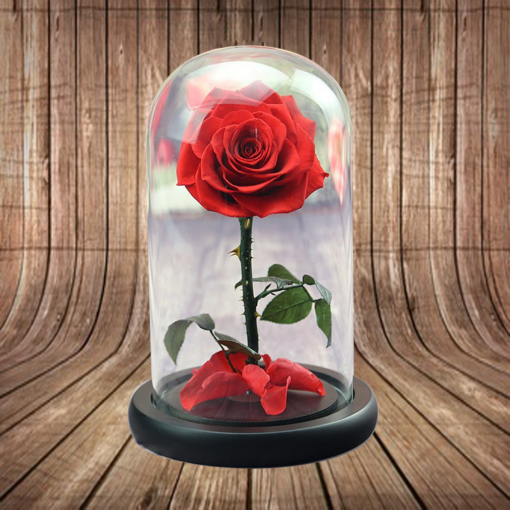 preserved rose dome